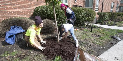 Workers planting a tree